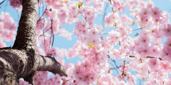 5 Tips for Spring Cleaning Your Health and Your Home